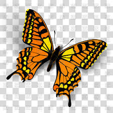 realistic butterfly on transparent background vector clipart image