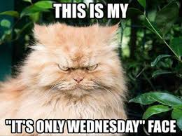 Wednesday Hump Day Meme - wednesday story day aka hump day fiction favorites