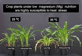 High Heat Plants Plant Nutrition And Physiology Molecular Biology Genetics And