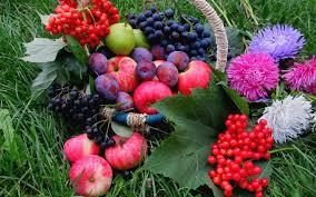 flowers fruit fruits flowers fruits grape apple vegetables nature wallpaper hd