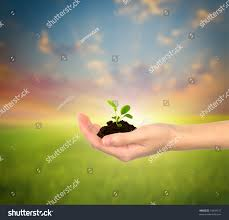 small plant small plant in hands isolated over white stock photo