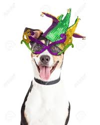 mardi gras dog photo of a happy and smiling dog wearing mardi gras glasses