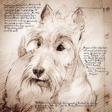 scottish terrier detail of a da vinci style drawing