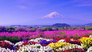 21 spring flower wallpapers flower backgrounds images pictures