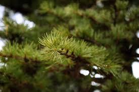 free images nature leaf flower moss green evergreen botany