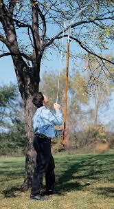 best pole saws top pole saws