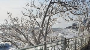 winter bridge rail trees icicles tree shore sea seaside city