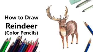draw reindeer color pencils lapse