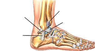 Foot Ligament Anatomy Atr Ankle U0026 Foot Anatomy On Emaze