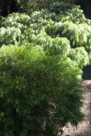 the most poisonous plants in australia hipages com au 51 best plant list collage images on pinterest plant