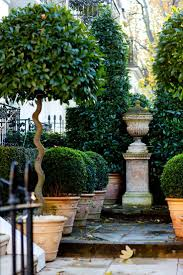 Decorative Shrubs Best 20 Potted Trees Ideas On Pinterest Potted Plants Patio