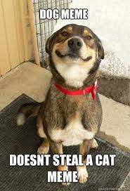 Funny Meme Dog - cat and dog memes funny http whyareyoustupid com cat and dog