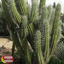plants moon valley nurseries