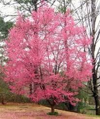 dogwood rocks a tree for all seasons dogwood trees cacti and
