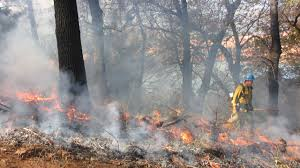 Ca Wildfire Training by Can California Burn Its Way Out Of Its Wildfire Problem Kqed