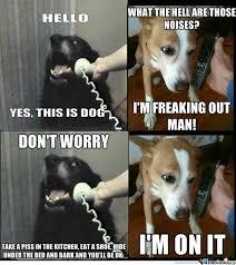 Hyper Dog Meme - deluxe 27 best funny and so true dog memes images on pinterest
