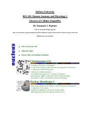 Anatomy And Physiology Glossary Bio 103 Anatomy And Physolog Hofstra University Course