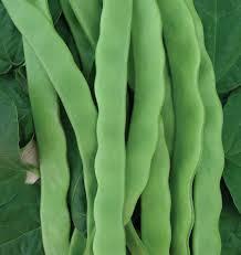 hilda romano pole bean seeds