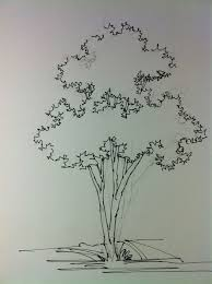 tree hand rendering some times simplicity and what you choose to