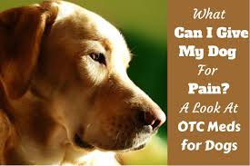 what can i give my dog for pain otc pain medications for dogs