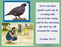 bible fun for kids moses manna u0026 quail to eat
