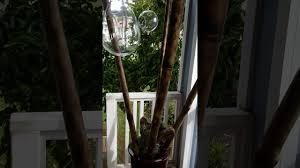 bamboo trellis youtube
