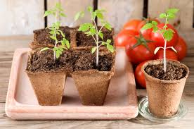Vegetable Container Gardening Guide by Container Gardening Salsa Recipe Guide Install It Direct