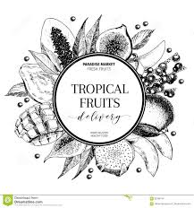 vector hand drawn smoothie bowls poster exotic engraved fruits