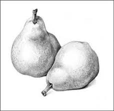 this pencil drawing of an apple shows form it shows form because