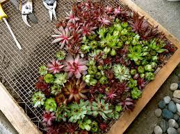 wonderful succulent wall art planter vertical succulent garden