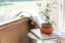 House Plant Plants Of Season 4 Joanna Gaines Shares Her Fixer Upper Secret