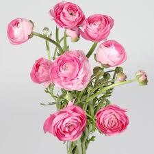 Ranunculus Flower Ranunculus Flower Sold In Bulk At Wholesale Price With Flower