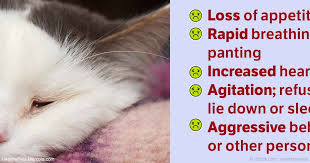 Taking Care Of A Blind Cat Cat Pain Relief What To Do If Your Pet Is Hurting