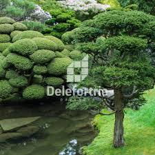 arbuste feuillage pourpre persistant arbre feuillage pourpre persistant 185424 u2013 usbrio com