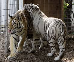 exotic animals new state rules on exotic animals to take effect jan 1