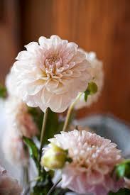 florist huntsville al contact frond floral co huntsville alabama wedding