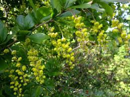 free images tree blossom fruit flower bloom bush food