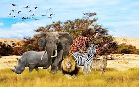 photography id 34556 tierbabys tierkinder wallpapers tiere african animals wallpaper for kids wall mural