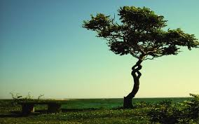 spiral tree by zaqheartcore on deviantart