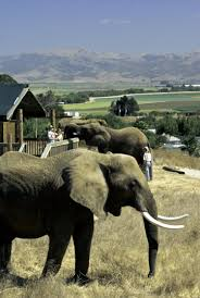 elephants serve breakfast at this california safari experience