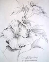 30 beautiful flower drawings art and design