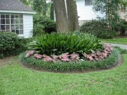 lovable landscaping ideas around trees cast iron plants caladiums