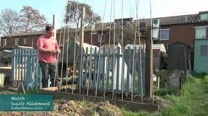 growing runner pole beans erecting climbing frame youtube