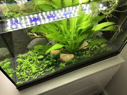 Planted Aquarium Aquascaping New Aquarium Rescape Adding A Staurogyne Repens Carpet Kierans Fish