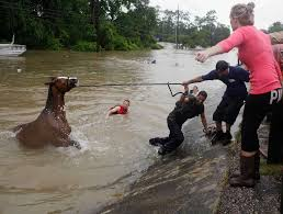 Used Horse Trailers For Sale In San Antonio Texas Raw Video Drowning Horses Fight For Survival In Flood Waters Near