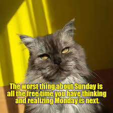 Thinking Cat Meme - the worst thing about sunday lolcats lol cat memes