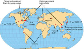 Types Of Bacterial Diseases In Plants - bacterial diseases in humans boundless biology