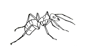 drawn ants realistic pencil and in color drawn ants realistic