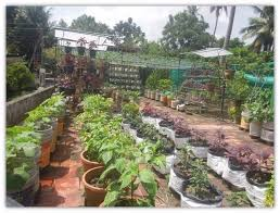 Organic Kitchen Gardening - there u0027s an organic farming revolution building in kerala and this