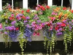 40 window and balcony flower box ideas photos repeating